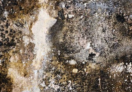 Effects of Dampness in Building