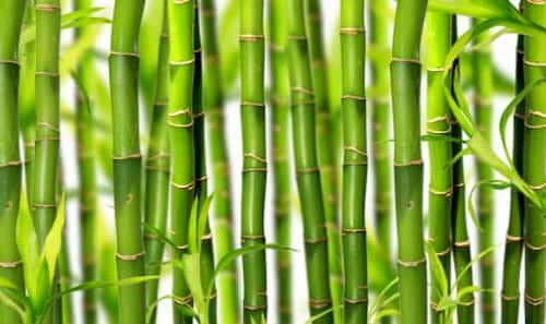 Disadvantages of Bamboo